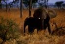 East Africa_2