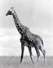 East African Wildlife 2_1