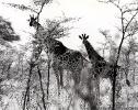 East African Wildlife 2_2