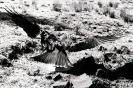 East African Wildlife 2