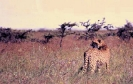 East African Travel 2_2