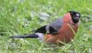 Garden Birds_4