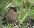 Garden Birds_5