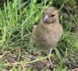 Garden Birds_6