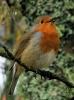 Garden Birds_7