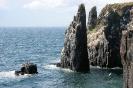 Isle of May_4